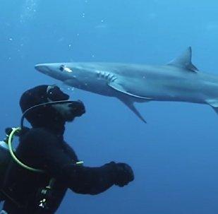 """鲨鱼""""亲吻""""了潜水员的额头"""