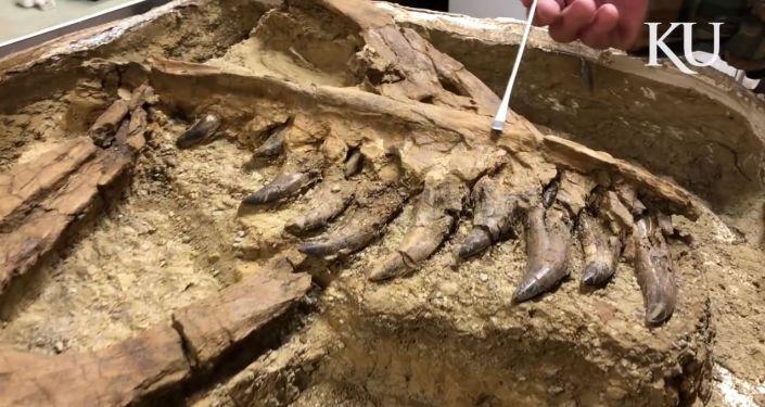 在南極洲發現了世界上最大的海怪遺骸