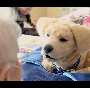 美国人制作一个用来抚摸的机器狗