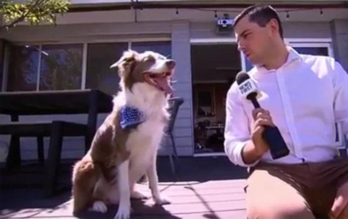 網紅狗狗爆笑接受採訪