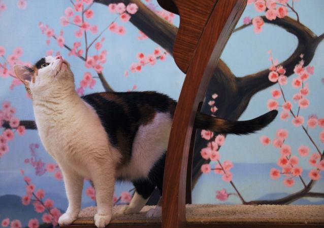 猫剧院的小演员们生活在特殊的公寓里,其中一栋为日式风格。