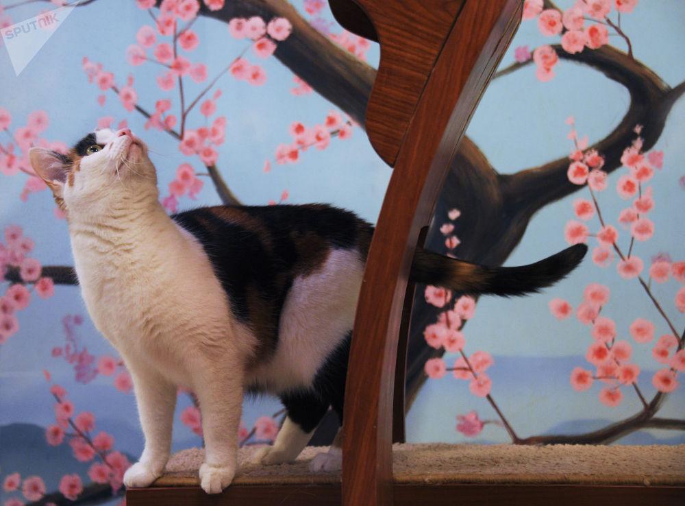 貓劇院的小演員們生活在特殊的公寓里,其中一棟為日式風格。