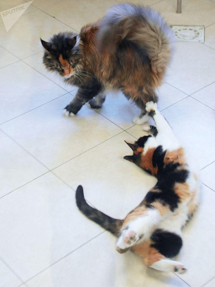 當貓感受到愛護、關注和愛撫時,表演就變成了愉快的遊戲。