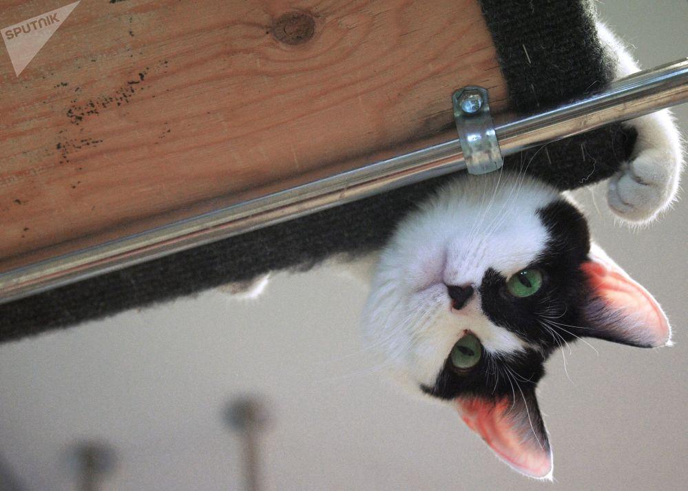 但在幕後它們和其他貓沒有分別,一樣那麼可愛。