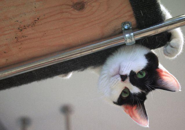 印尼猫咪弄断主人耳机线 道歉方式乐坏网友