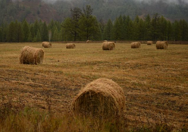 立陶宛将对华出口青贮饲料