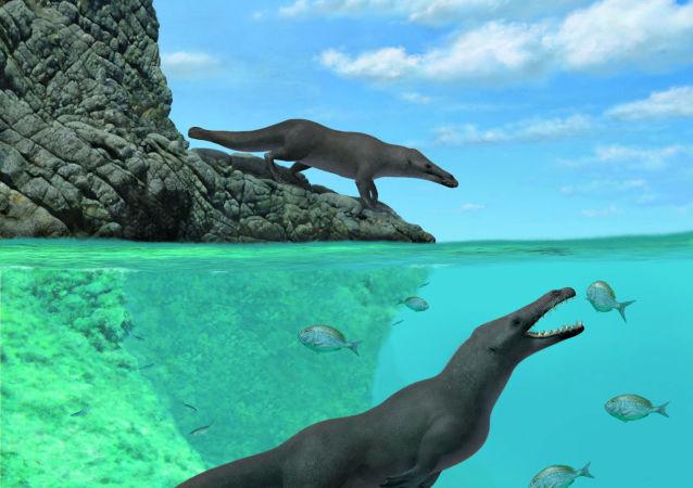 秘鲁发现远古时期的四条腿鲸化石