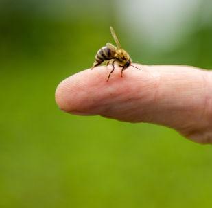 在美国与蜜蜂交流被认为是有效的抗压方式吗?
