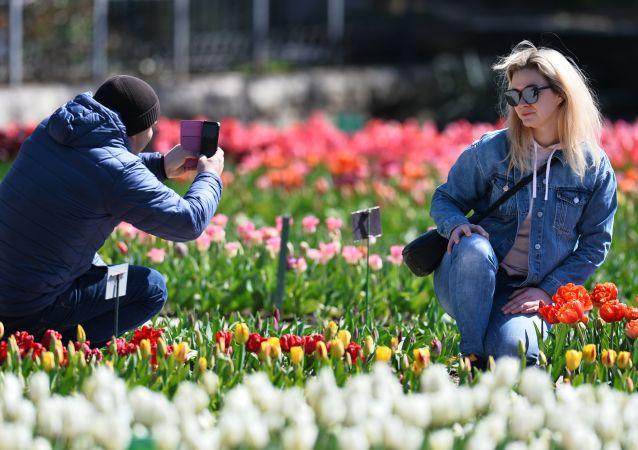 克里米亚尼基塔植物园里的游客。