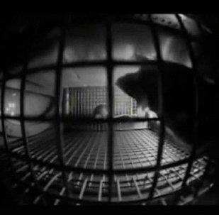 視頻拍攝小鼠在國際空間站的異常行為