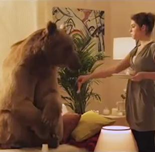 棕熊斯捷潘的奇特生活