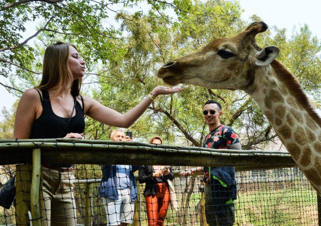 Жираф и посетители Львиного сафари-парка возле города Претория, ЮАР