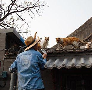 解壓良藥:為甚麼中國人需要養貓養狗?
