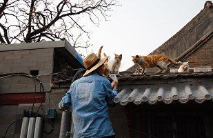 解压良药:为什么中国人需要养猫养狗?