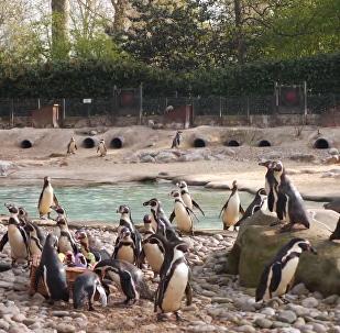 倫敦動物園小動物獲贈復活節彩蛋