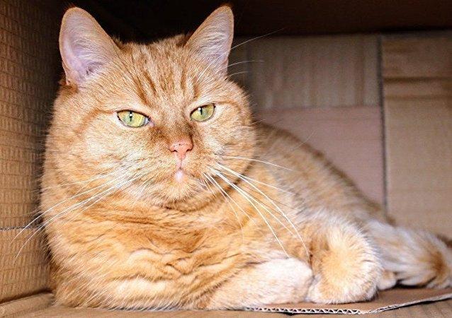 科學家闡釋貓對盒子之愛