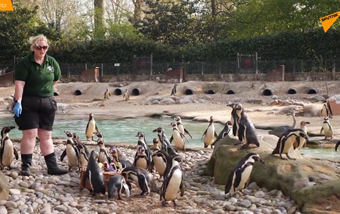 伦敦动物园小动物获赠复活节彩蛋