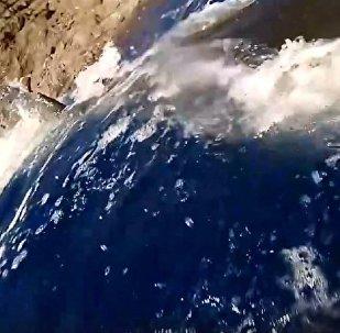 攝影師被大白鯊襲擊的視頻在網絡暴紅