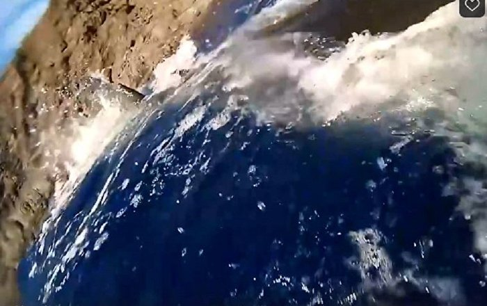 摄影师被大白鲨袭击的视频在网络暴红