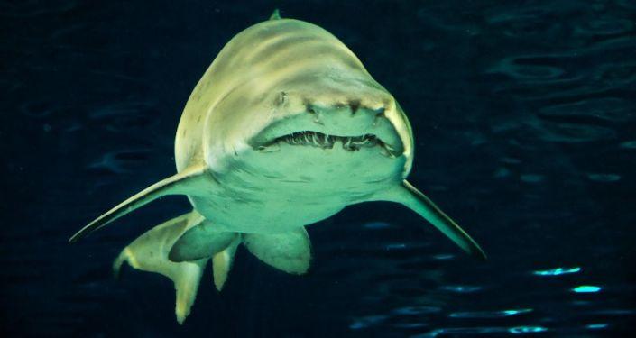 Акула под водой