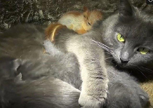 克里米亞一隻貓收養新生小松鼠