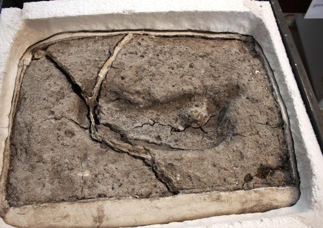 智利发现美洲最古老人类足迹