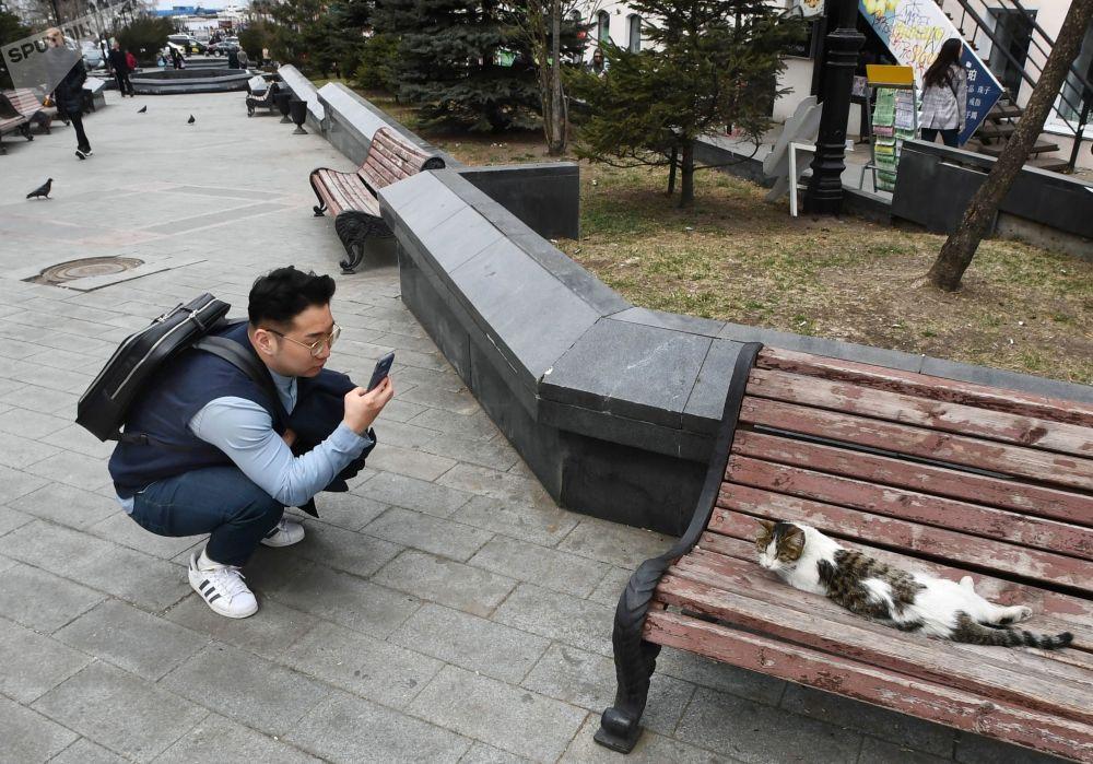 符拉迪沃斯托克福金海军上将街上一名游客在拍一只猫。