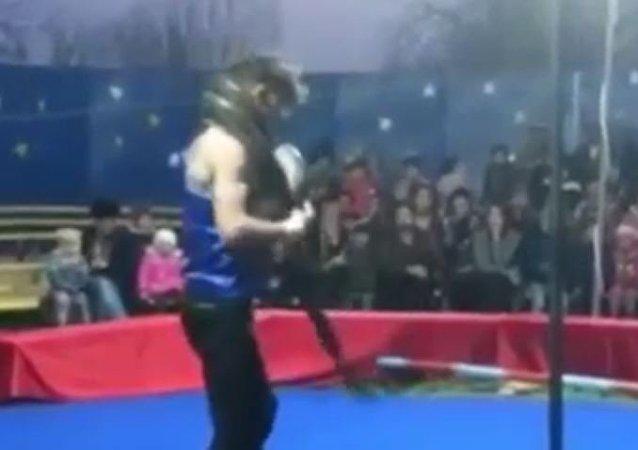 馴蛇師表演時被巨蟒勒死