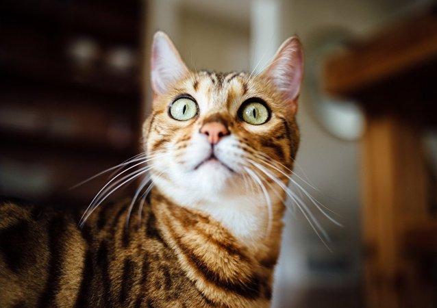 一名莫斯科男子把貓扔出窗外以報復姑娘