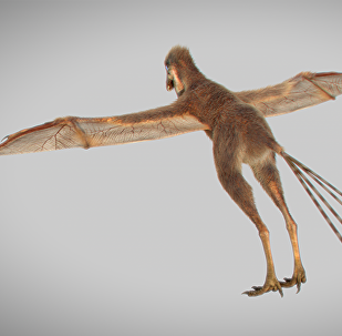 中国科学家们又发现一种长有蝙蝠翅膀的恐龙