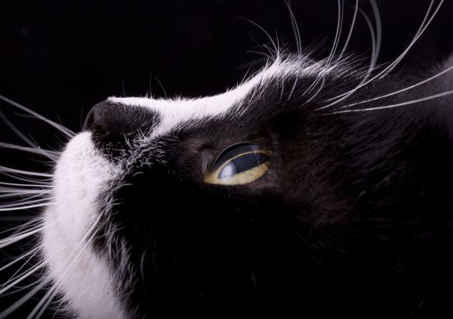 有著大偵探鬍鬚的迷人貓咪刷爆社交網