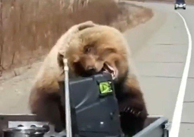熊抢劫俄罗斯猎人