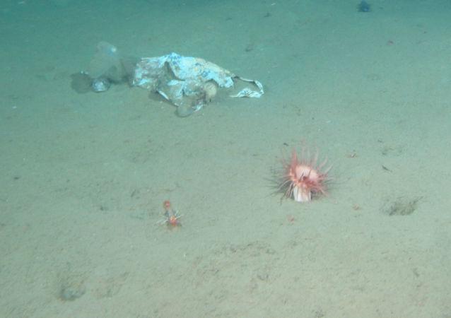 美國探險隊在馬里亞納海溝底部有了驚人發現