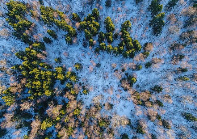 俄西伯利亞非法販賣林產品的犯罪案件數量出現增長