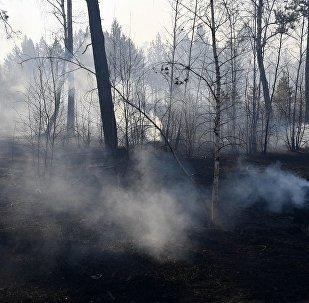 俄远东地区火情已趋于稳定