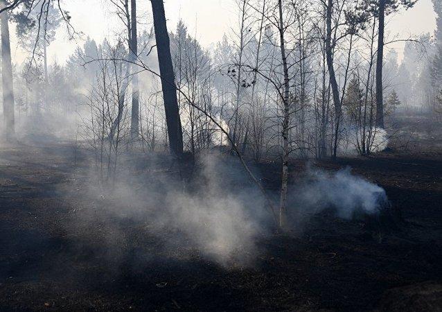 俄中交界處所有山火都已被撲滅