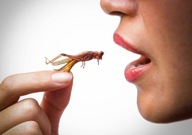 科學家揭示為何人們應當開始吃昆蟲