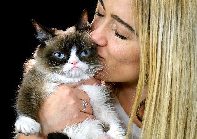风靡网络的不爽猫去世