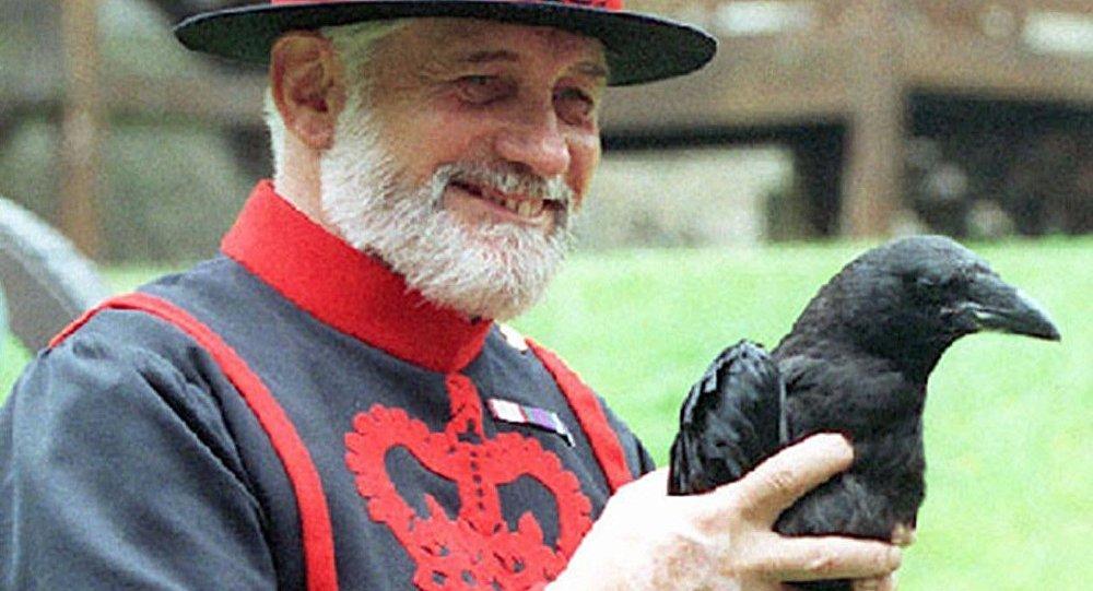 倫敦塔黑烏鴉30年來首次繁育後代