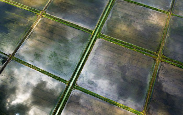 克拉斯諾達爾地區的水稻種植