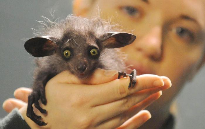 世界上最奇特的动物