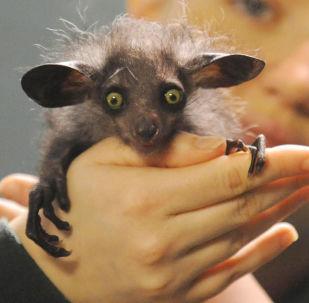 世界上最奇特的動物