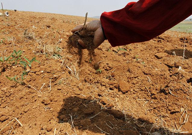朝鮮最近4年來的嚴重旱災正造成新的災難