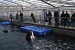 克宮密切關注「鯨魚監獄」相關情況