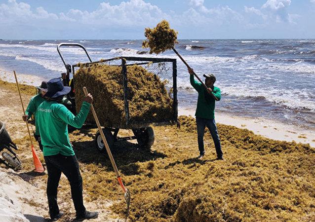 墨西哥用海藻鞋和回收塑料做鞋
