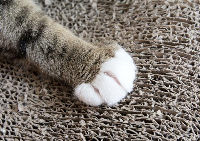 有著奇異「髮型」的酷貓成了網絡明星