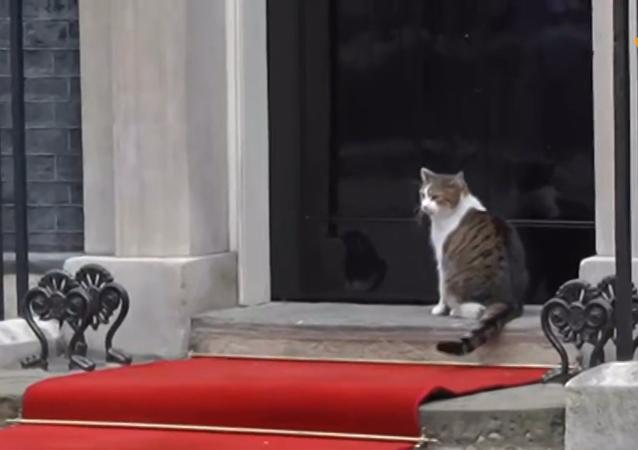 英国首相府御猫在特朗普与特雷莎·梅会谈期间现身