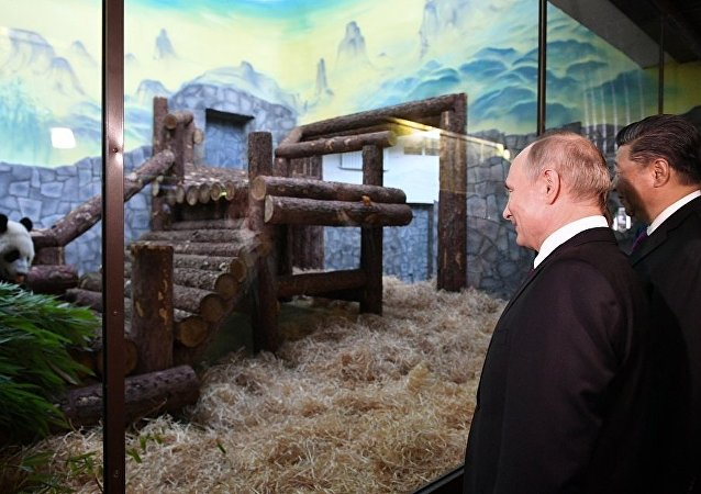 普京和习近平参观莫斯科动物园熊猫馆