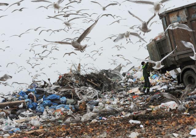 普京:环境和气候问题或将招致大规模的动荡