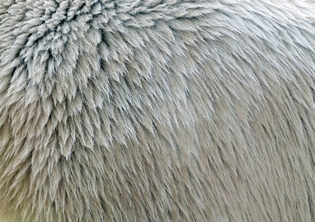 新型仿生隔熱材料結構類似北極熊毛髮